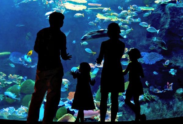 A visual model of St Petersburg Oceanarium